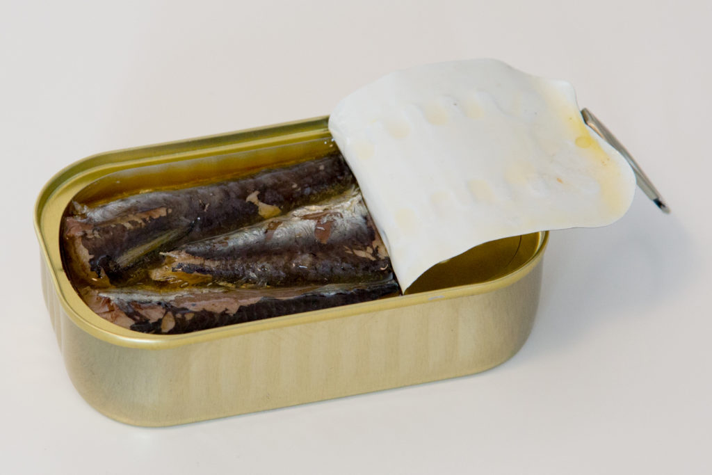 Nuri Sardinen echtes Aussehen Bilder Sardinen